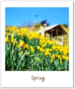 Spring1_2