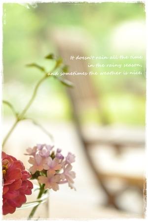 Hdflower0622